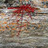 Rotsplant in rivieroever van Johan Zwarthoed thumbnail