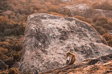 Affe von Fotoverliebt - Julia Schiffers