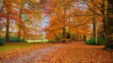 der niederländische Wald im Herbst von eric van der eijk