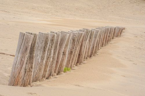 Palen strand Ameland van