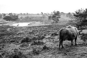 Hooglander in weide Landschap van Loes Valckx