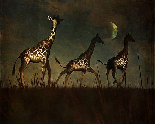 Vluchtende giraffen