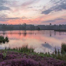 Heide vennen in paars roze ontwaken van Chantal van Dooren