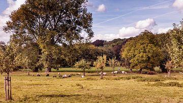 Ferme du château de Genhoes House Meadow sur Rob Boon