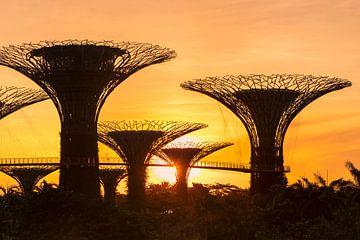Supertrees bei Sonnenaufgang, Gardens by the Bay, Singapur, von Markus Lange