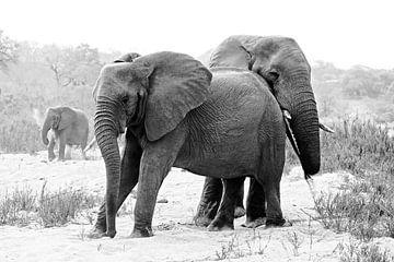 Olifanten in rust  van