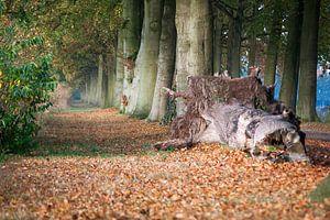 Pad van bladeren van