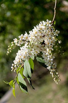 Prachtige bloem van jada fotografie