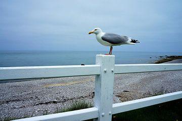 Zeemeeuw op wit hek Normandië von Sandra van der Burg