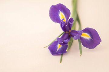 iris van Marian van den Boogaard