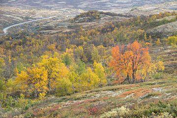 Herfst in Dovrefjell van Barbara Brolsma