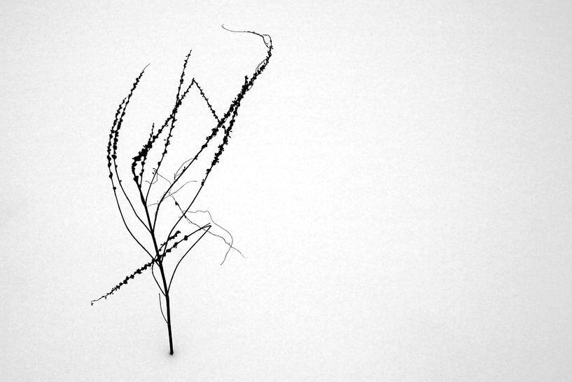Un buisson nu dans la neige sur Frank Herrmann