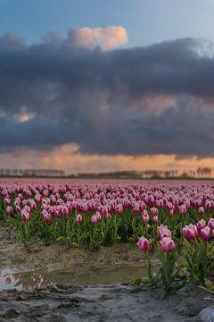 Bedrohlich wirkende Wolken über Tulipfield. von Rossum-Fotografie
