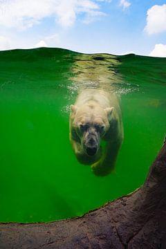Eisbär unter Wasser von Angela Dölling