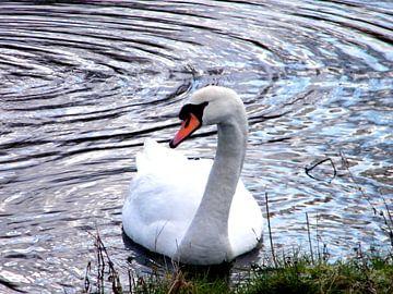 Mooie zwaan. Beautiful swan. van Joke Schippers