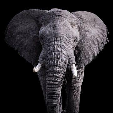 Portrait d'éléphant en noir sur Sharing Wildlife