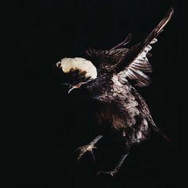 Crouching chicken hidden dragon! Een kippen portret van Lotje van der Bie Fotografie