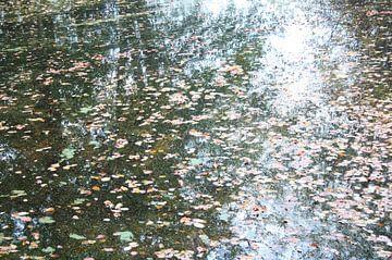 Weerspiegeling in de herfst van Jessica van den Heuvel