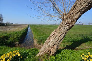 Hedikhuizen, Weide in Polderlandschaft von Verrassend Brabant
