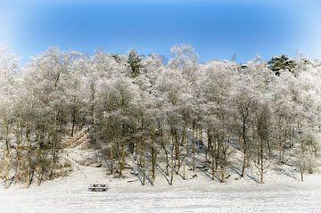 Besneeuwde bomen von Mark Bolijn
