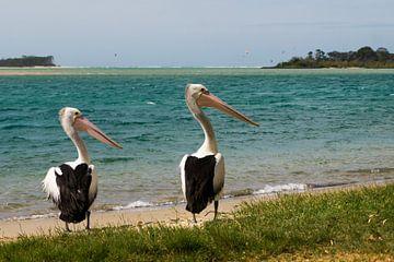 Pelikanen paar van Ludo Marrink