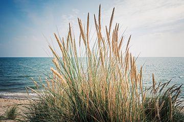 Sylt - Strand und Dünengras von Alexander Voss