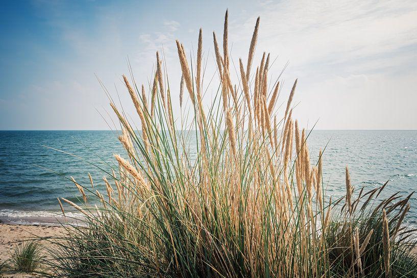 Sylt - Beach Grass and the North Sea van Alexander Voss
