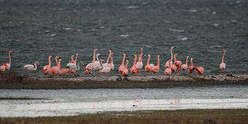 flamingo's 9 van Marloes van der Beek-Rietveld