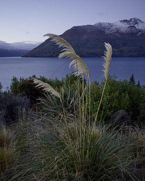 Vederig gras op het meer van Keith Wilson Photography