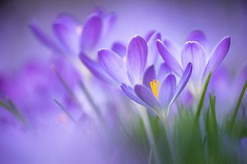 Exuberant spring van