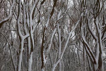 Besneeuwde bomen. van