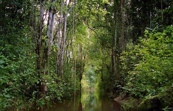 Borneo van Paul Optenkamp