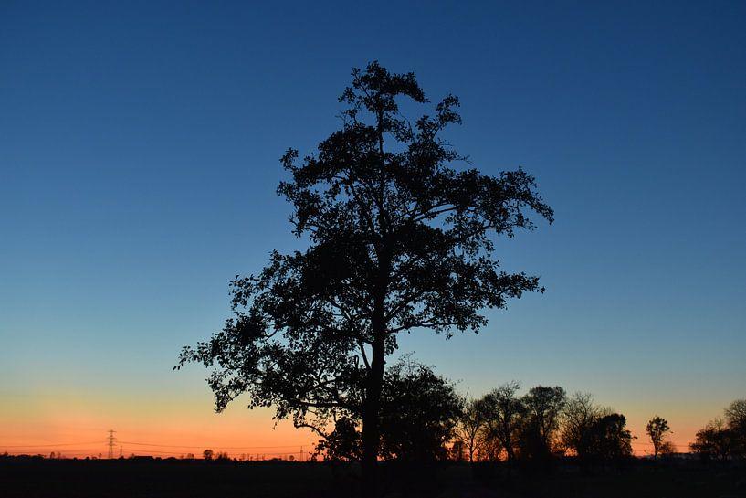 Lonely Tree van Johanna Varner