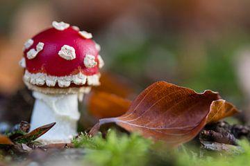 Kleine paddenstoel van Evelyne Renske