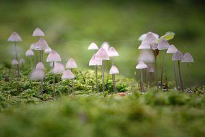 Small mushroom lights