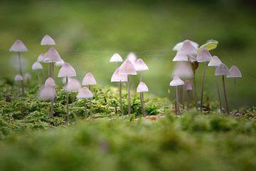 Kleine Pilzleuchten von Erich Werner