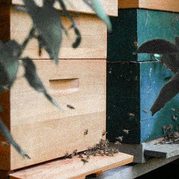 Utrecht - Bijenkast grove korrel van Wout van den Berg