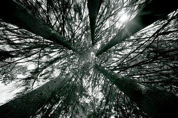 Grands arbres - dans les arbres sur Jacqueline Lemmens