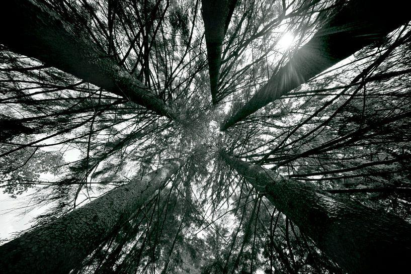 HOGE BOMEN - INTO THE TREES van Jacqueline Lemmens