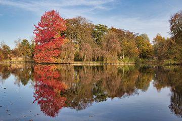 Der schönste Baum von Henrico Fotografie