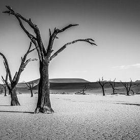 Deadvlei - Namibie van Eefke Smets