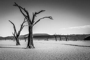 Deadvlei - Namibie van