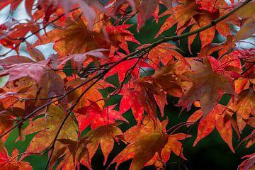 Prachtige rode boombladeren van Aukelien Minnema