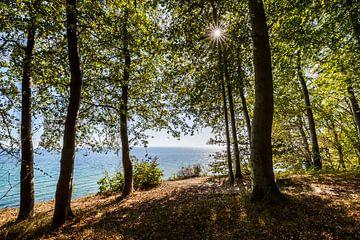 Küstenwald von Ursula Reins