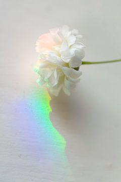 Regenboog von Sandor Ploegman-Stam