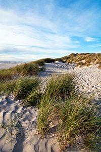 Danish Dune Landscape