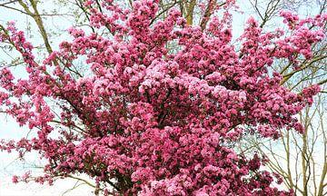 Rosa blühender Baum von Anita Snik-Broeken