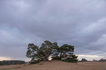 Donkere lucht boven Kootwijkerzand van Barbara Brolsma