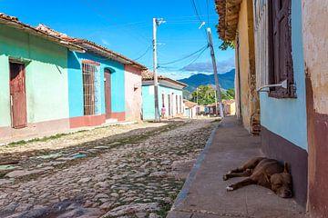 Slaperige hond in Trinidad