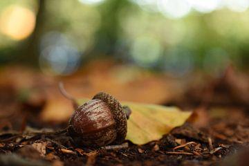 Eikeltje in een prachtige herfst omgeving Acorn van Patricia van Nes